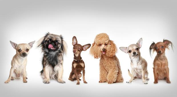 В новой программе Григорий Манёв научит зрителей «Моей Планеты» понимать собак