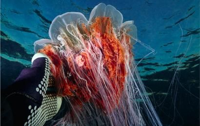 «Моя Планета» откроет зрителям подводный мир Арктики