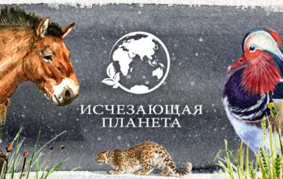 Проекты канала «Продвижение» вышли в финал XVI Всероссийского конкурса «ТЭФИ-регион»