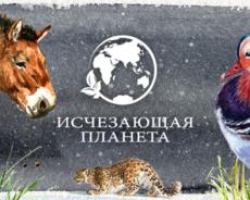 """Телеканал """"Продвижение"""" получил """"ТЭФИ-Регион"""" за дизайн"""