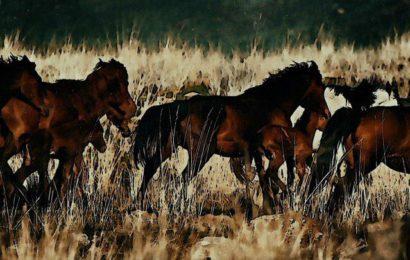 Все о людях и лошадях здесь и сейчас